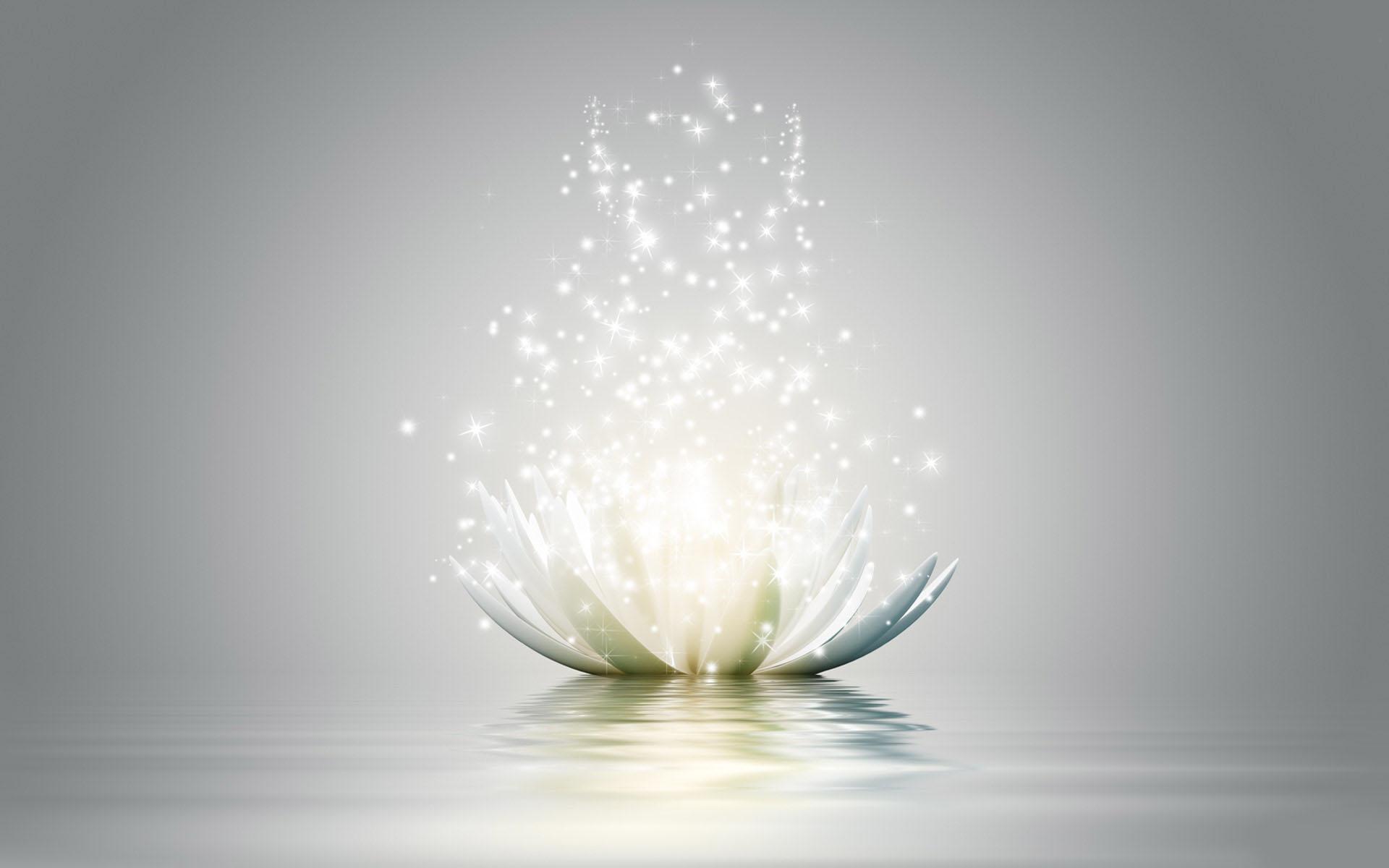 Lotus Flower Wallpaper Araya Rebirth